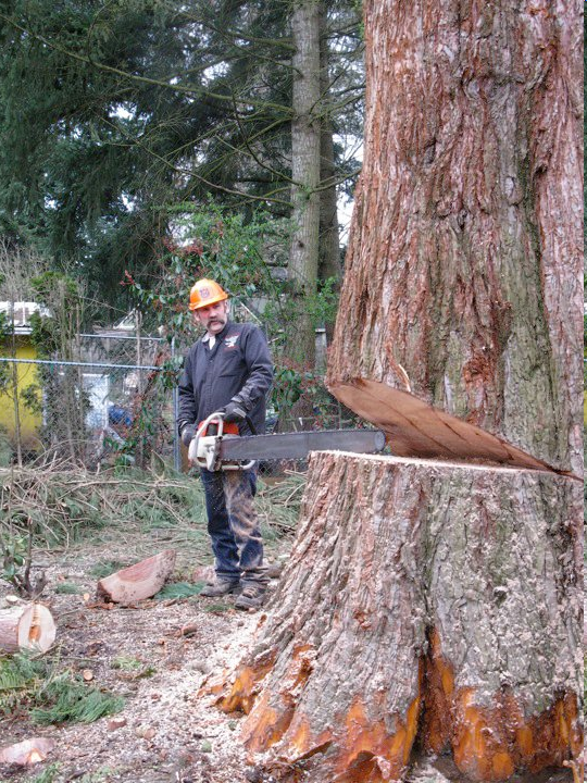 Safe Tree Trunk Removal