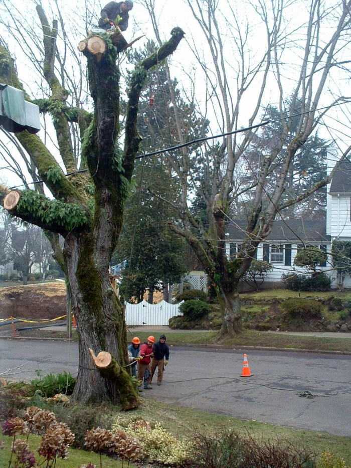 Safe Tree Removal by Tree Masters Portland Oregon