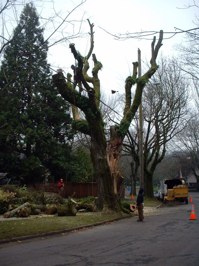 Tree Masters tree removal piece by piece