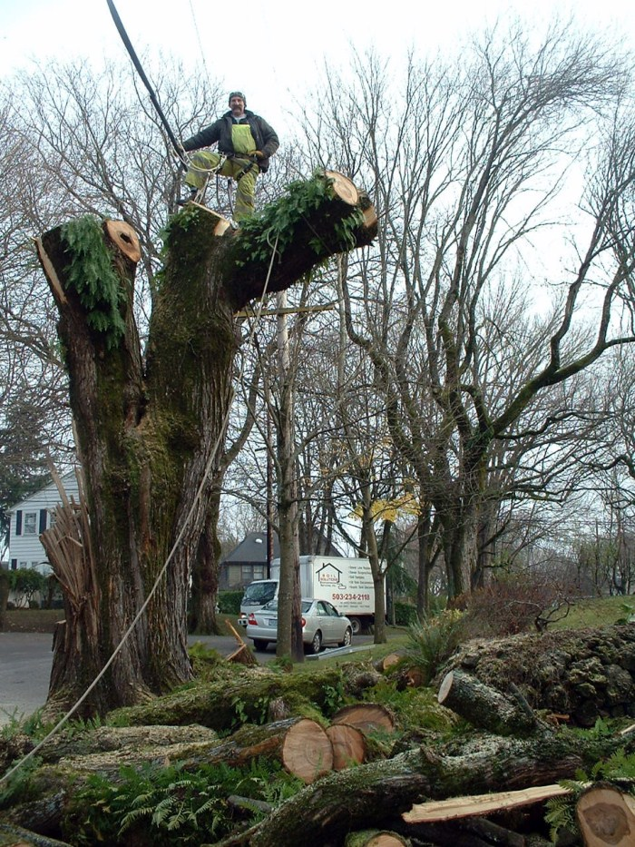Removing dangerous tree